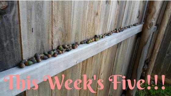 This Week's Five!!!