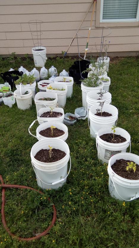Start of the garden